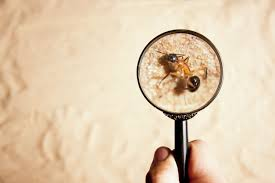 Things to expect from a pest inspection in Gold Coast